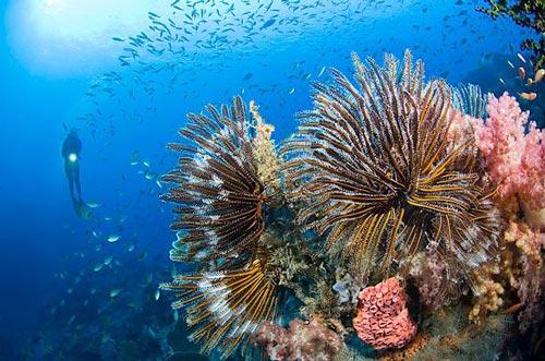 Rạn san hô rực rỡ sắc màu