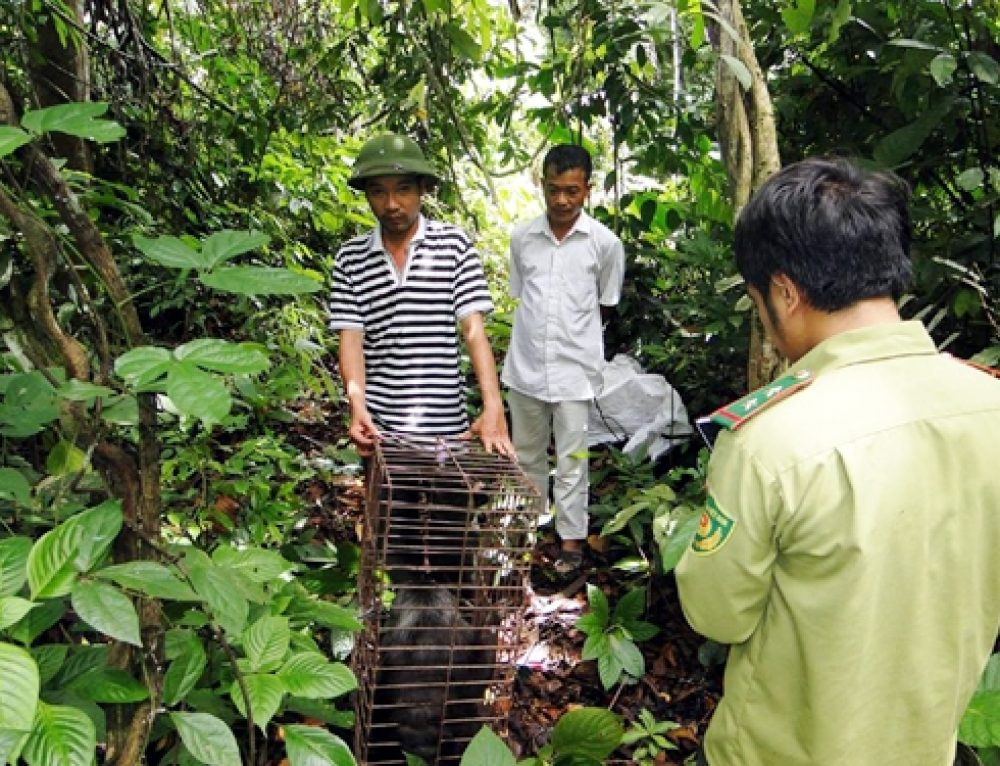 Solutions to conserve biodiversity of Cat Ba National Park